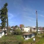 Abattage épicéa de 20m de haut entre les habitations_Montbéliard